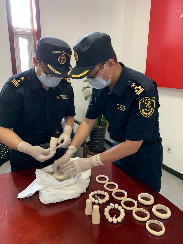 天津税関、密輸象牙製品1200グラムを押収