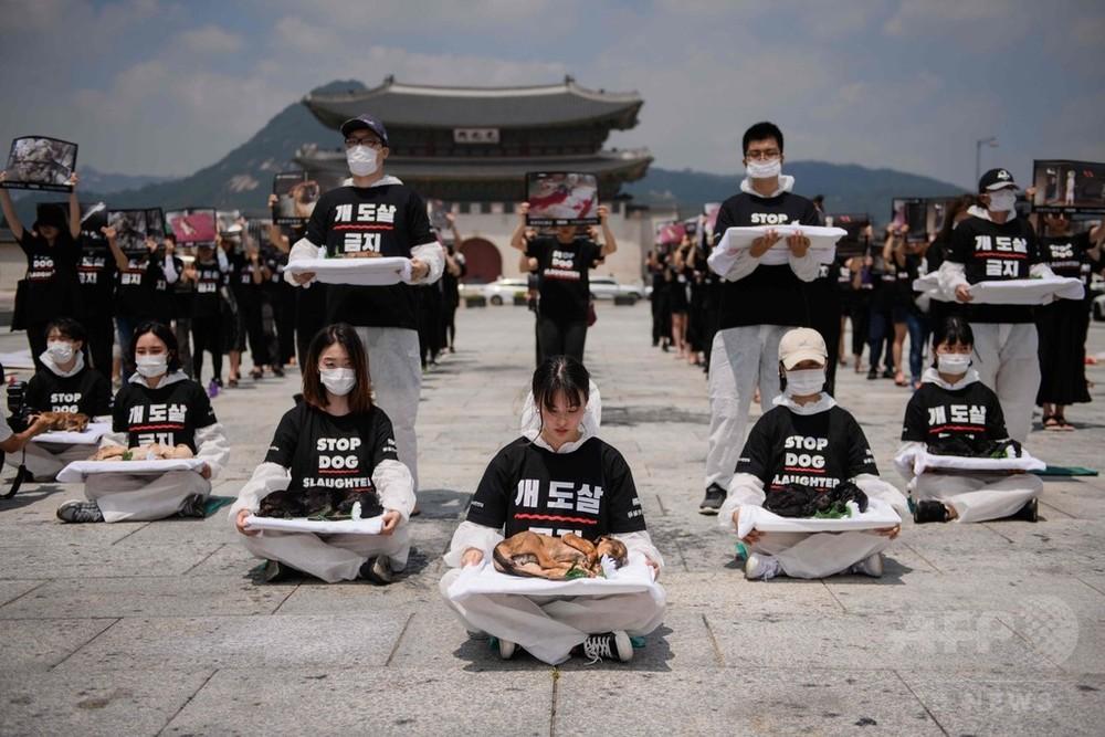 犬の死骸掲げて犬肉売買に抗議 韓国の動物愛護団体