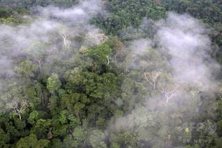 森で迷った女性、「ブッシュクラフト」で生還 オーストラリア