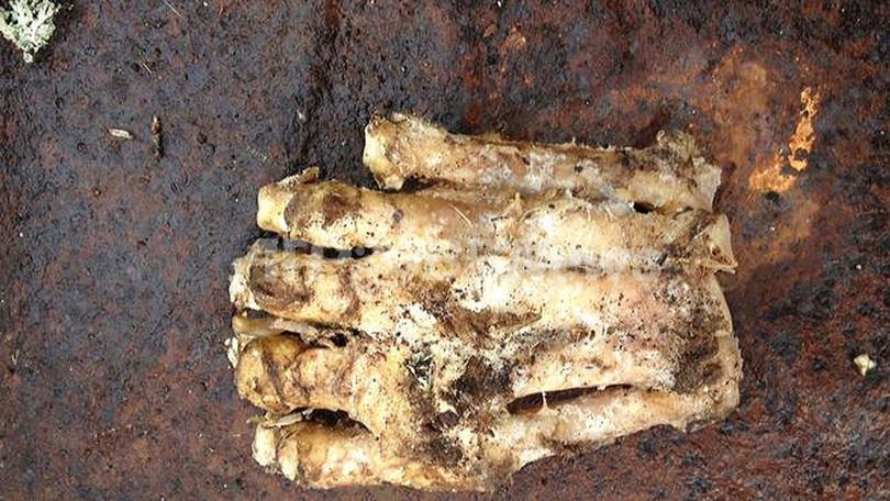 米国で大きな「足のようなもの」発見、ビッグフットか?