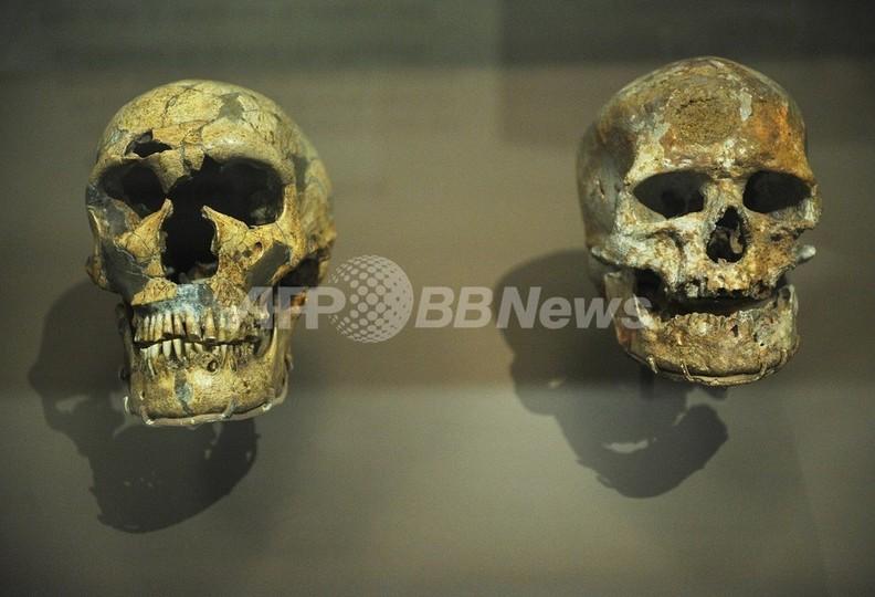 ヒトとチンパンジーの体の違いは「調節DNA」の欠落に起因、米研究