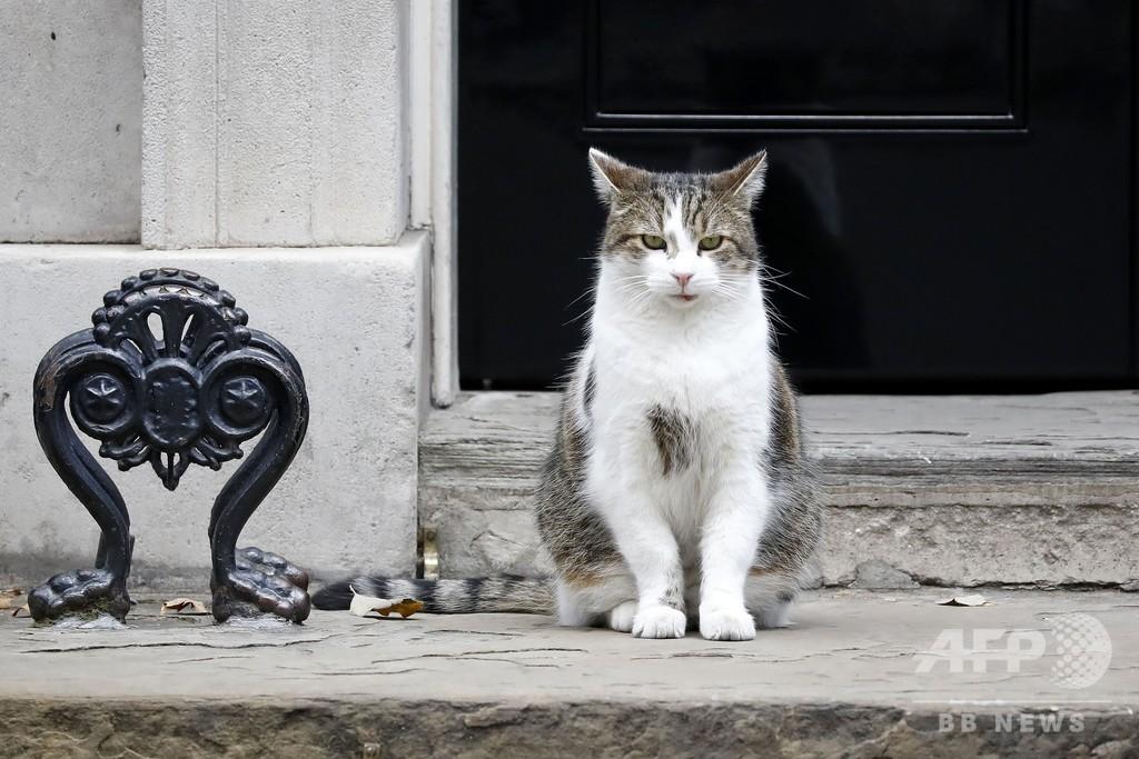 猫のラリーにライバル出現? 英首相官邸に子犬が入居