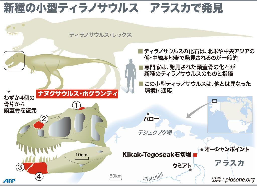 「北極の王」 新種の小型ティラノサウルス、米アラスカで発見