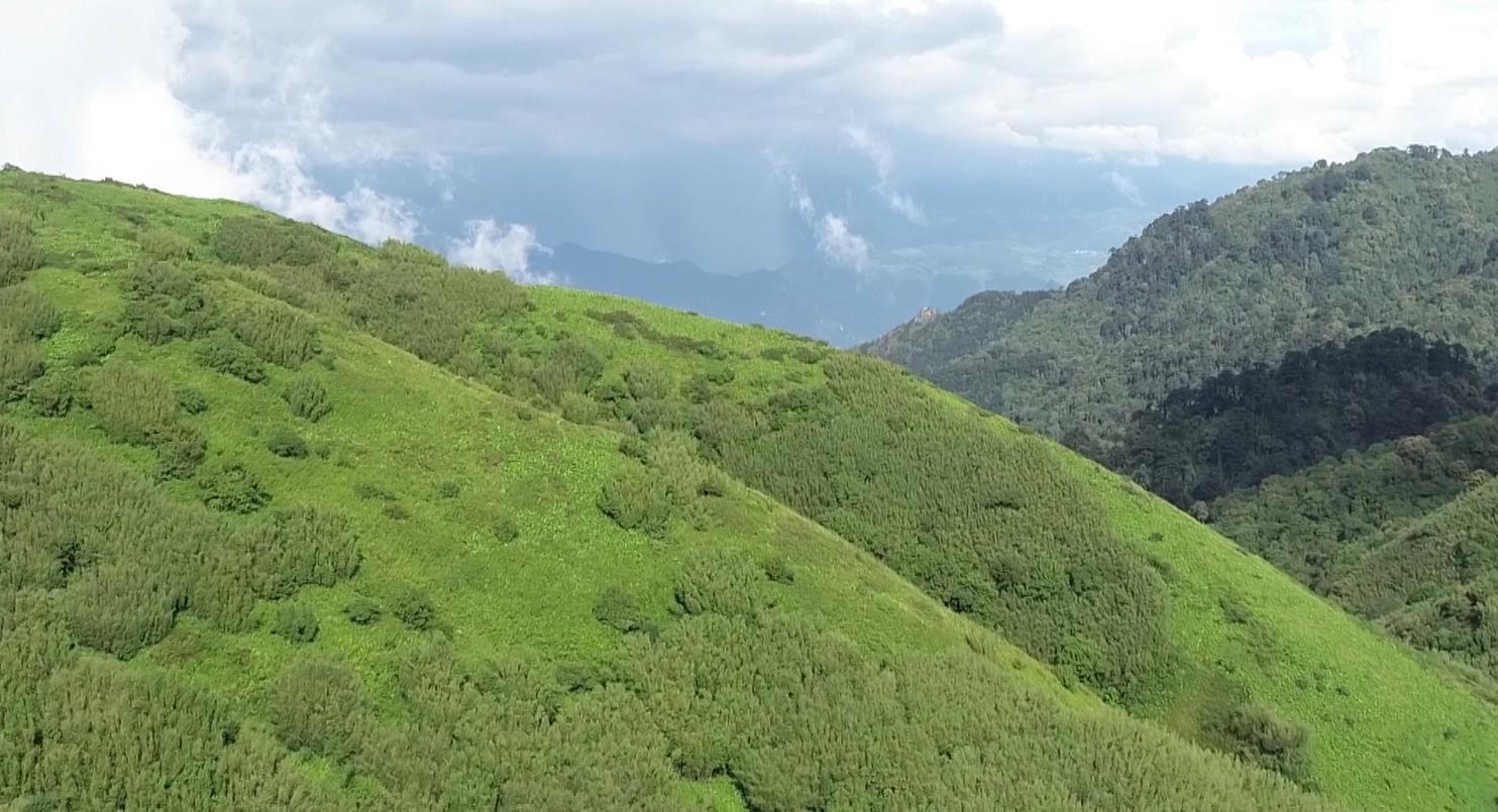 自然に恵まれた野生動物の宝庫、雲南省高黎貢山を訪ねて