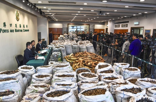 密輸象牙など2000キロ超を押収 中国の税関