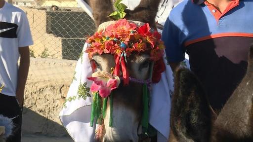 動画:モロッコでロバの「美人コンテスト」、村人らに飼育奨励