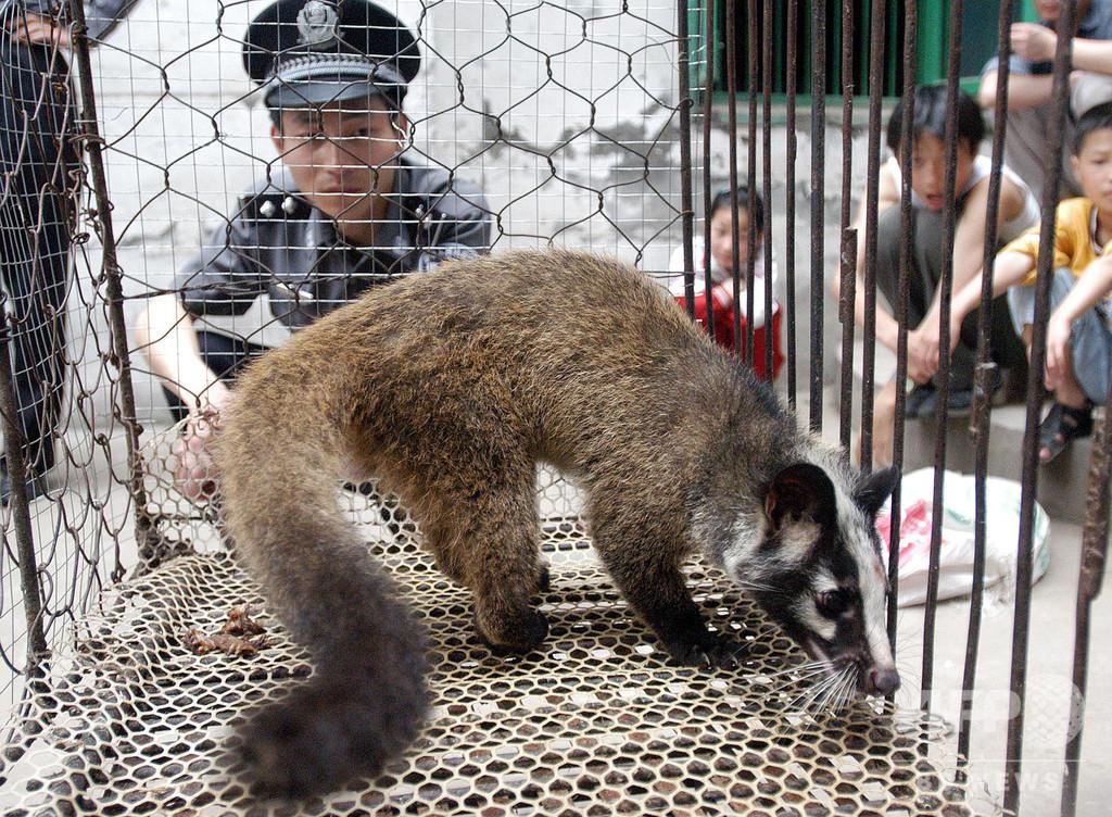 中国当局、野生動物の取引を一時的に禁止 流行の沈静化まで