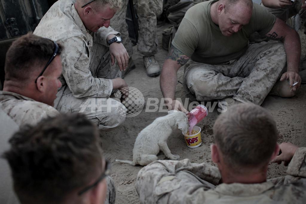 「たっぷりお食べ」、戦場の子犬が米兵に安らぎのひととき