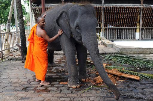 僧侶へのお布施は「ヘルシーに」、スリランカ政府が指導