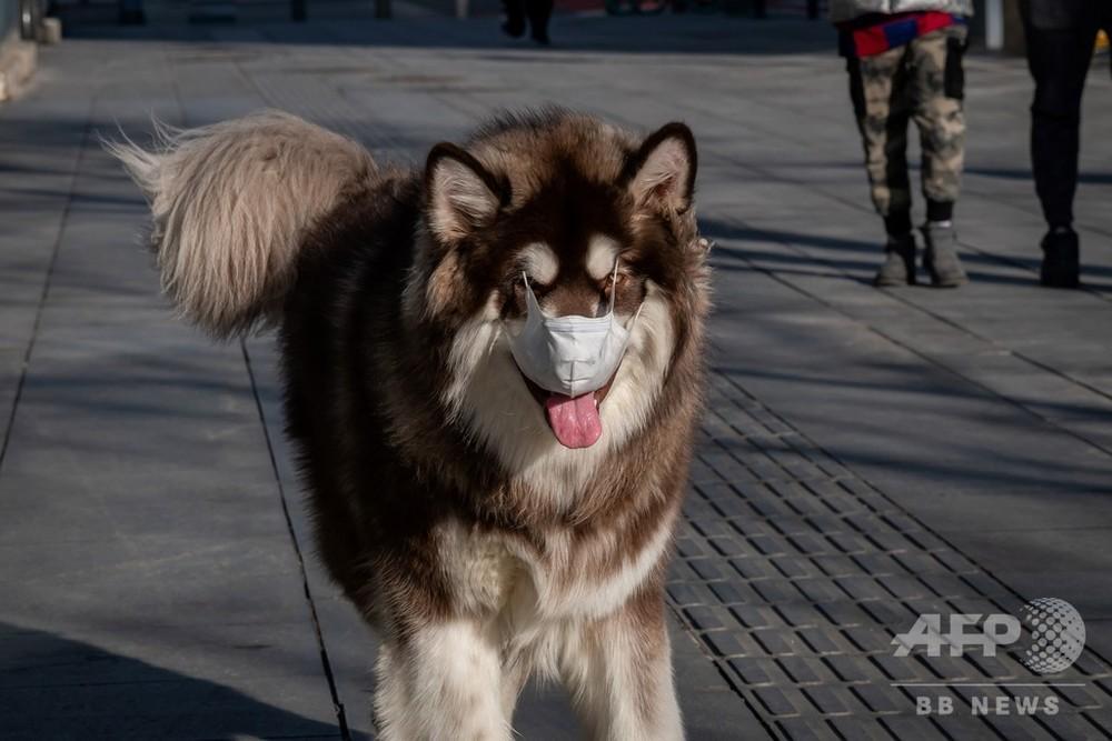症状 ウイルス 犬 コロナ 犬に新型コロナウイルスはうつる?!犬のコロナウイルス感染症とは。