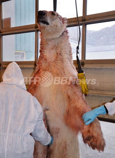 学生らホッキョクグマに襲われ1人死亡、重傷少年の頭からクマの歯摘出