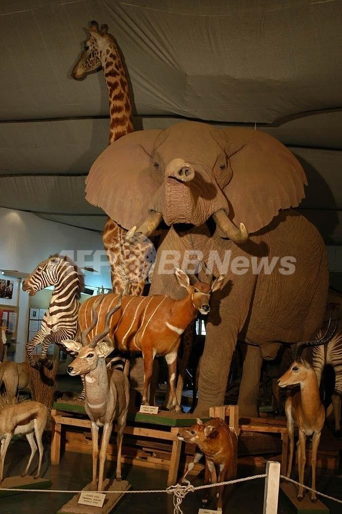 ケニア国立博物館が再オープン、大統領が植民地時代の遺品の返還求める