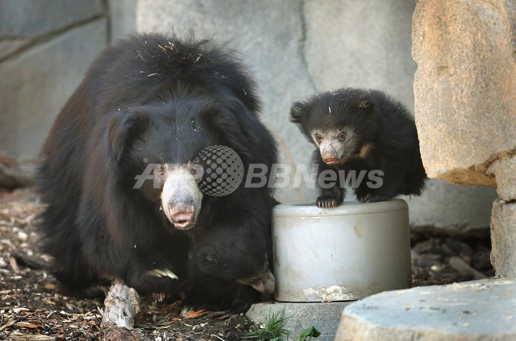 生後3か月の「ナマケグマ」、米動物園で公開