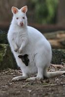 【特集】おもしろ動物写真集~癒やし系から仰天系まで~