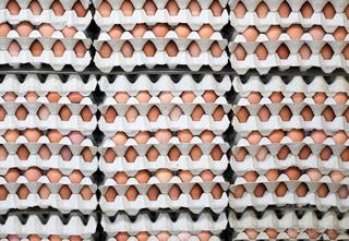 ノルウェー五輪選手団、誤訳で卵1万5000個発注 1人124個ノルマ?