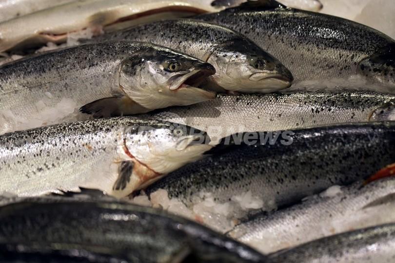 脂肪の多い魚に乳がんリスク減の効果、調査報告
