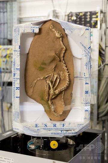 新種の「半水生」肉食恐竜を発見、ベロキラプトルの近縁種 研究