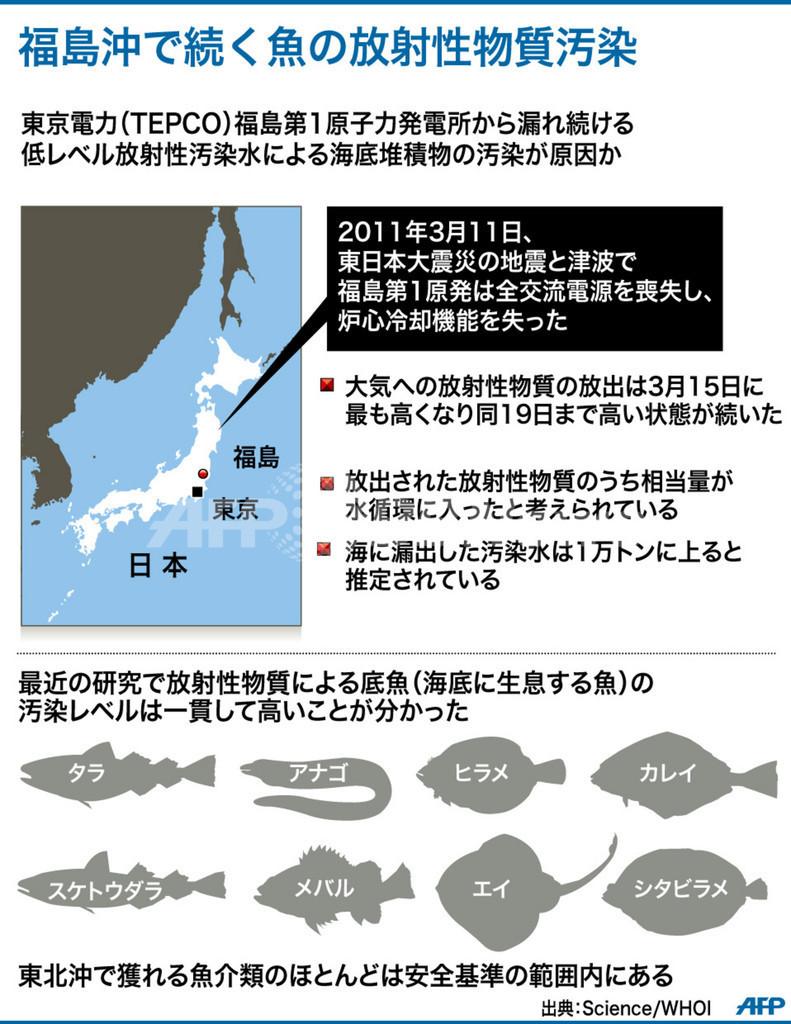 福島沖の魚介類、放射性レベル下がらず 国際調査