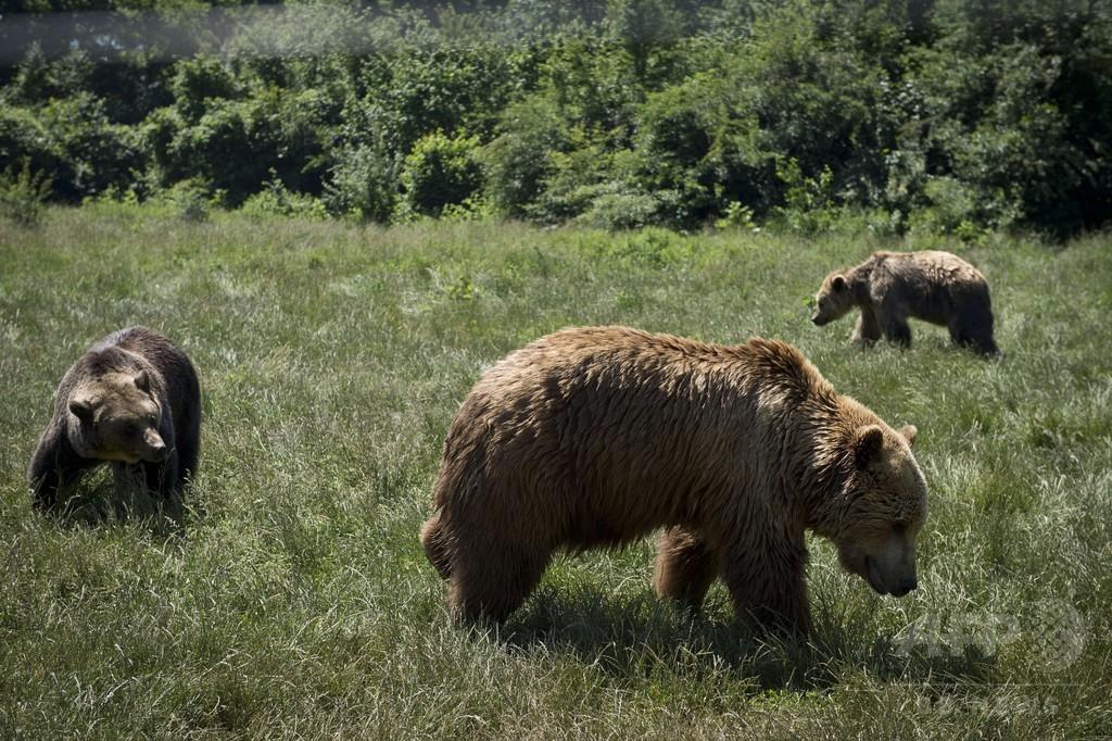 見せ物にされたクマたち、心の傷癒やす保護区へ ルーマニア