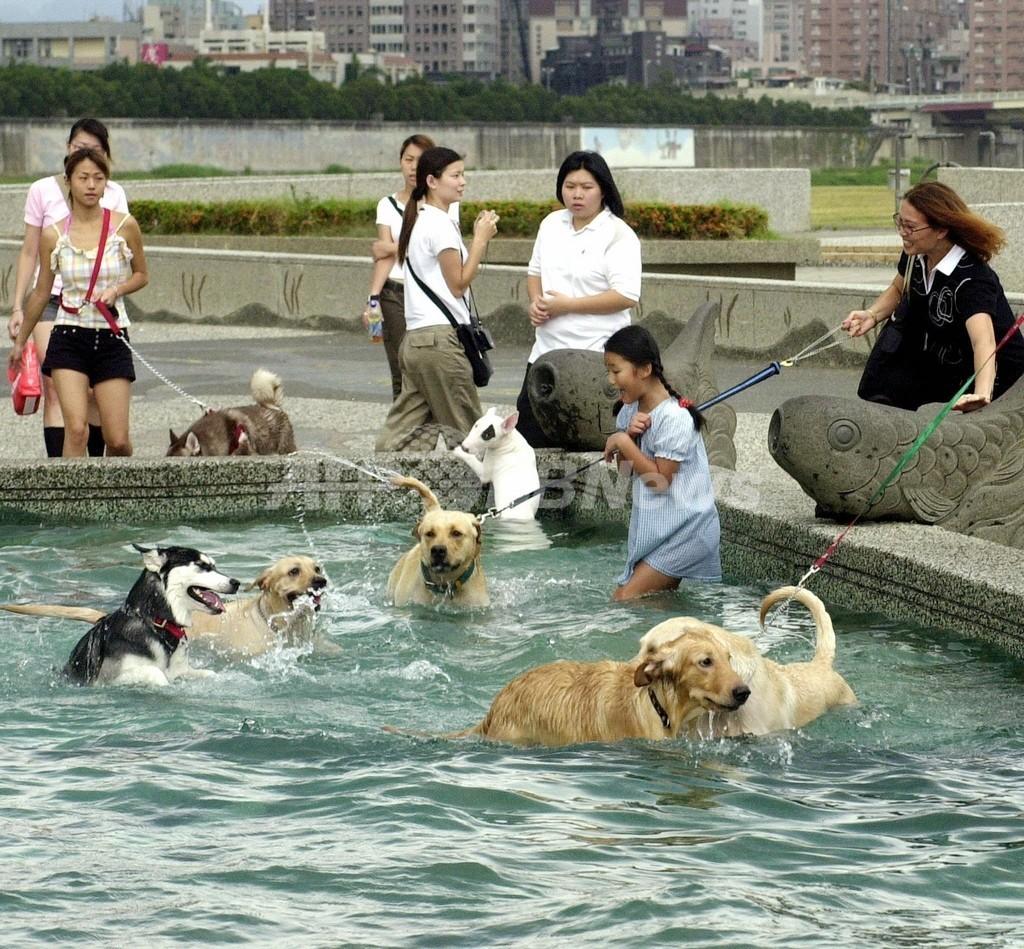 犬のふん拾いで商品券進呈、台湾当局