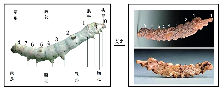 中国で5000年以上前の養蚕の痕跡見つかる 研究者が解明