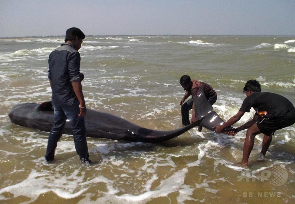 クジラの群れ座礁、45頭死ぬ インド