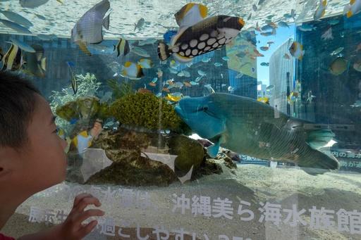銀座を泳ぐ美ら海の生き物たち 「ソニーアクアリウム 2019」