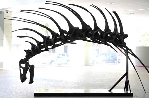 新種の草食恐竜発見、背中に長く鋭いとげの列 パタゴニア
