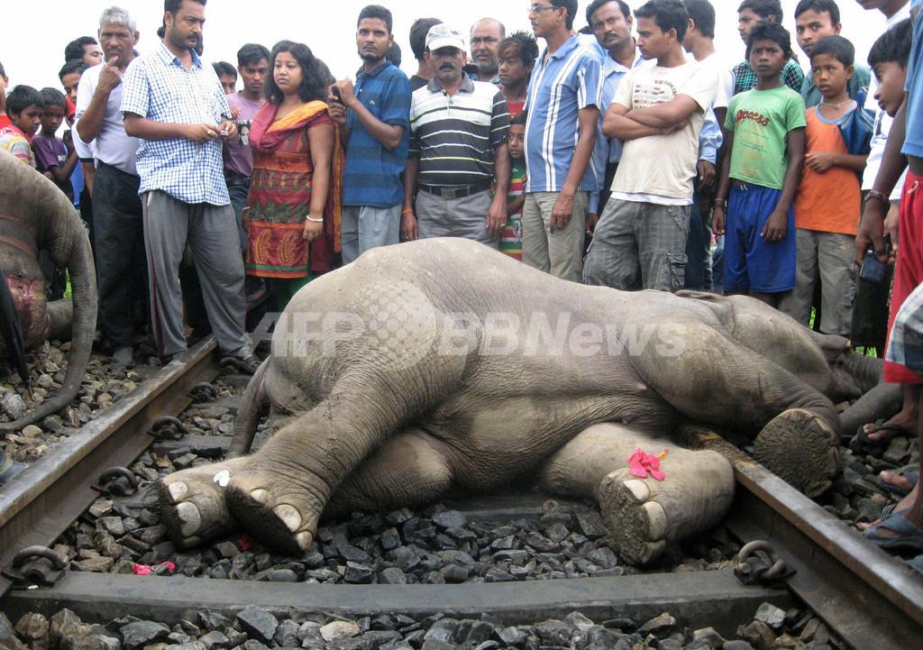 列車がゾウ4頭をはねる、インド
