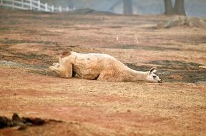 米カリフォルニアの森林火災、行方不明者631人に急増 死者は66人に