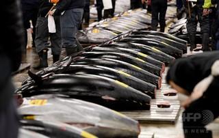 クロマグロ漁獲枠の拡大は資源保護の「後退」
