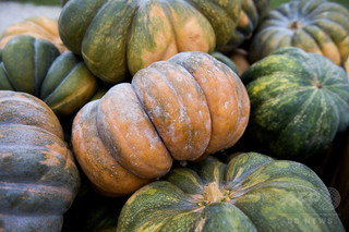カボチャなどウリ科の野菜、苦味に注意 食中毒で脱毛 初の症例報告