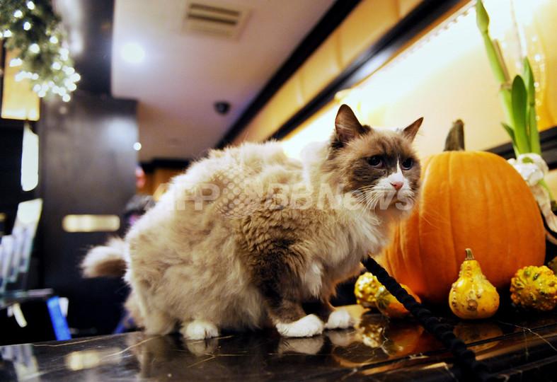 米NY老舗ホテルの名物ネコ、衛生条例で「囚われの身」に