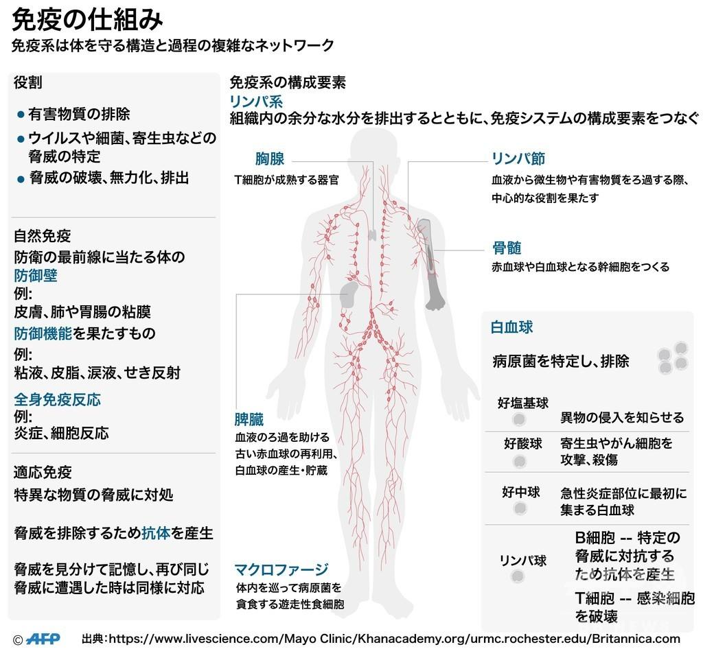 【図解】免疫の仕組み、体を守る構造と過程の複雑なネットワーク