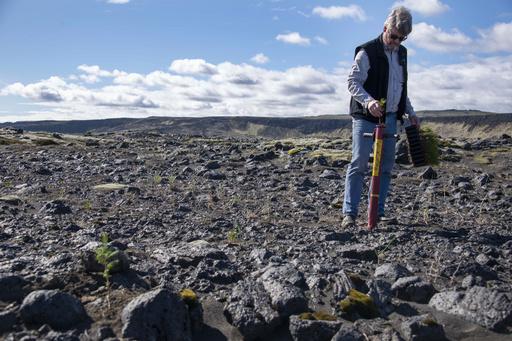 バイキングが絶やした緑を取り戻せ、アイスランド森林再生の矛盾