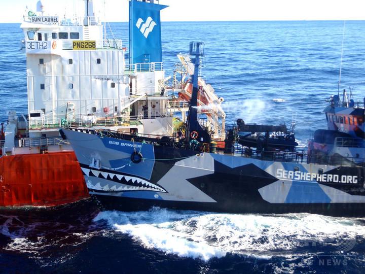 シー・シェパード、フェロー諸島の鯨漁阻止へ出航