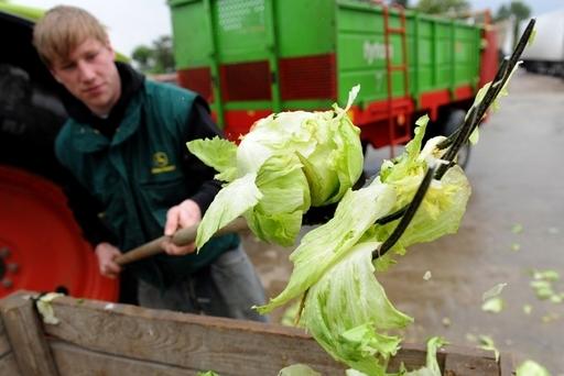 食中毒相次ぐドイツで新たに4人死亡、キュウリの病原性大腸菌汚染が原因か