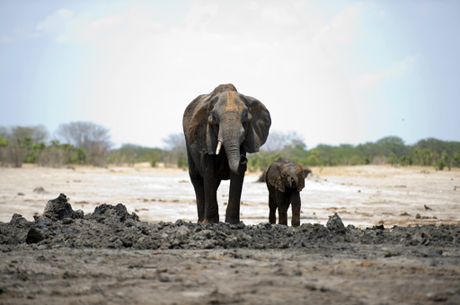ジンバブエでまたゾウ毒殺、22頭の死骸を発見