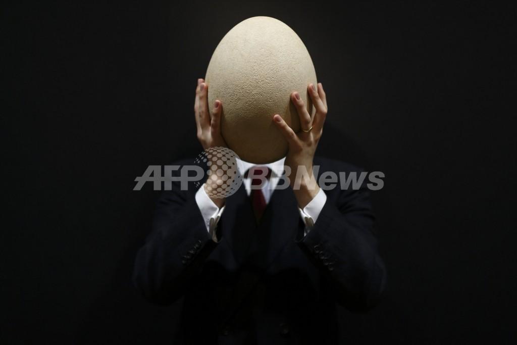 鶏卵の100倍!「世界最大の鳥の卵」が競売に