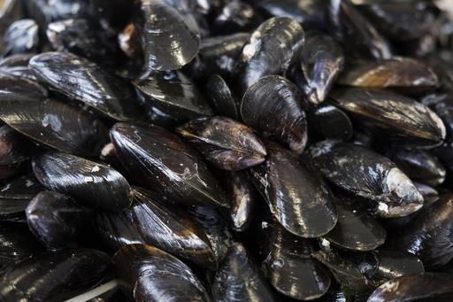 海温上昇で「生きゆで」に… NZで最大50万個の貝死ぬ