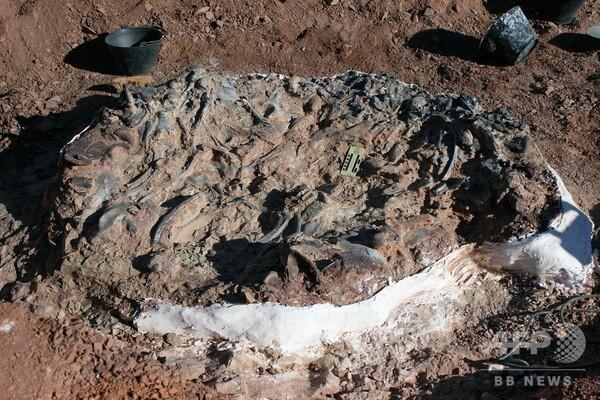2億2000万年前の恐竜の化石を発見、アルゼンチン