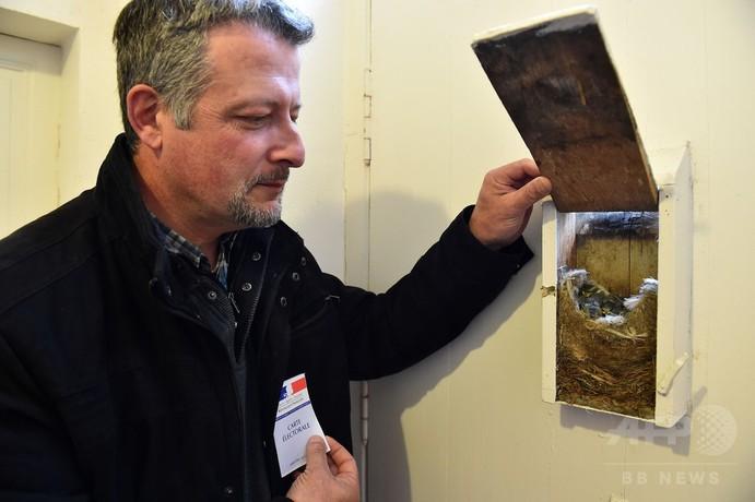 郵便箱のひな鳥に配慮、投票は裏口から 仏大統領選