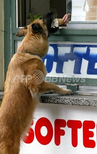 イヌでも消化できるアイスを発売、ネスレ