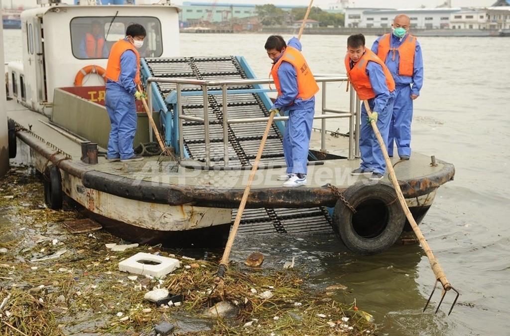 上海ブタ大量死、「回収おおむね完了」 死骸1万6000匹超す