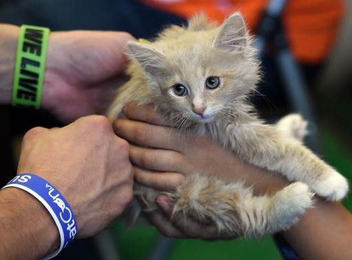 米農務省、研究でのネコの使用を中止 残ったネコ14匹は職員の元へ