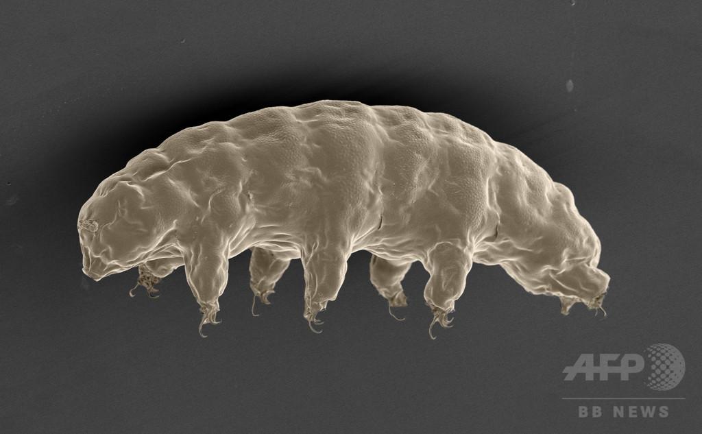 ヒトDNAをX線から守るクマムシ由来のタンパク質を発見、東大研究
