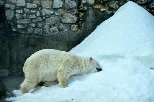 ロシア禁輸措置、動物園はメニュー変更に四苦八苦