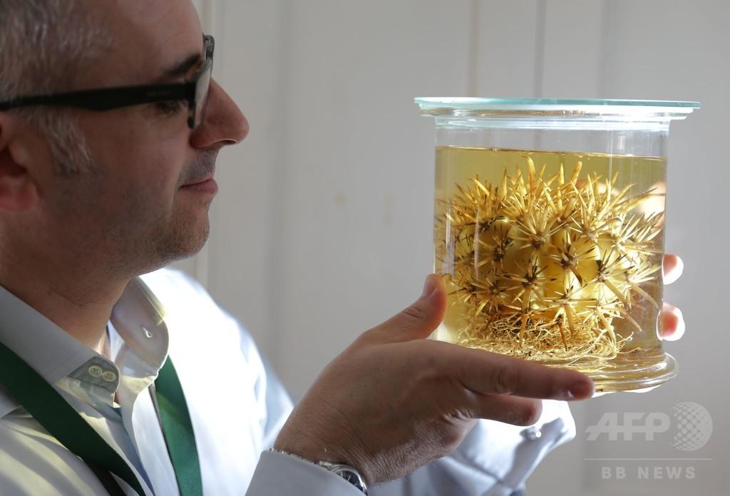 世界の植物が直面する脅威、報告書発表 英王立植物園