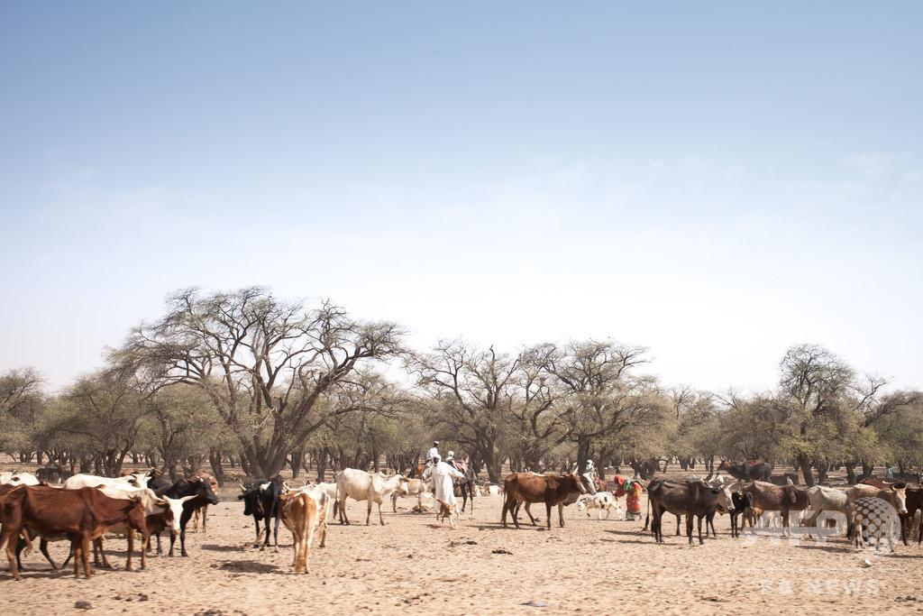 チャドで農耕民と牧畜民が衝突、37人死亡 「国家的懸念」と大統領