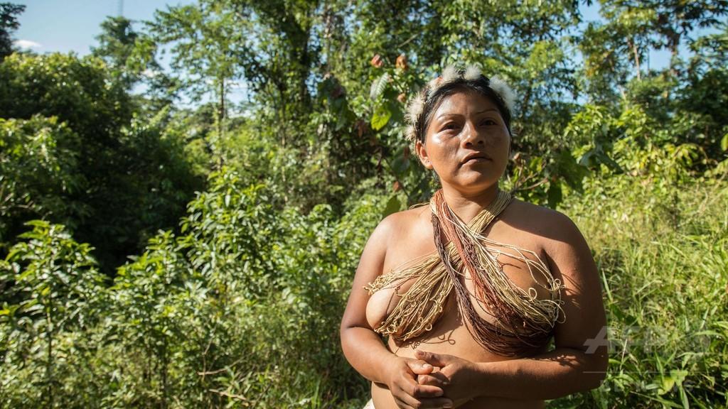 カカオ栽培・ピラルク保護・自治政府 環境守るアマゾン先住民